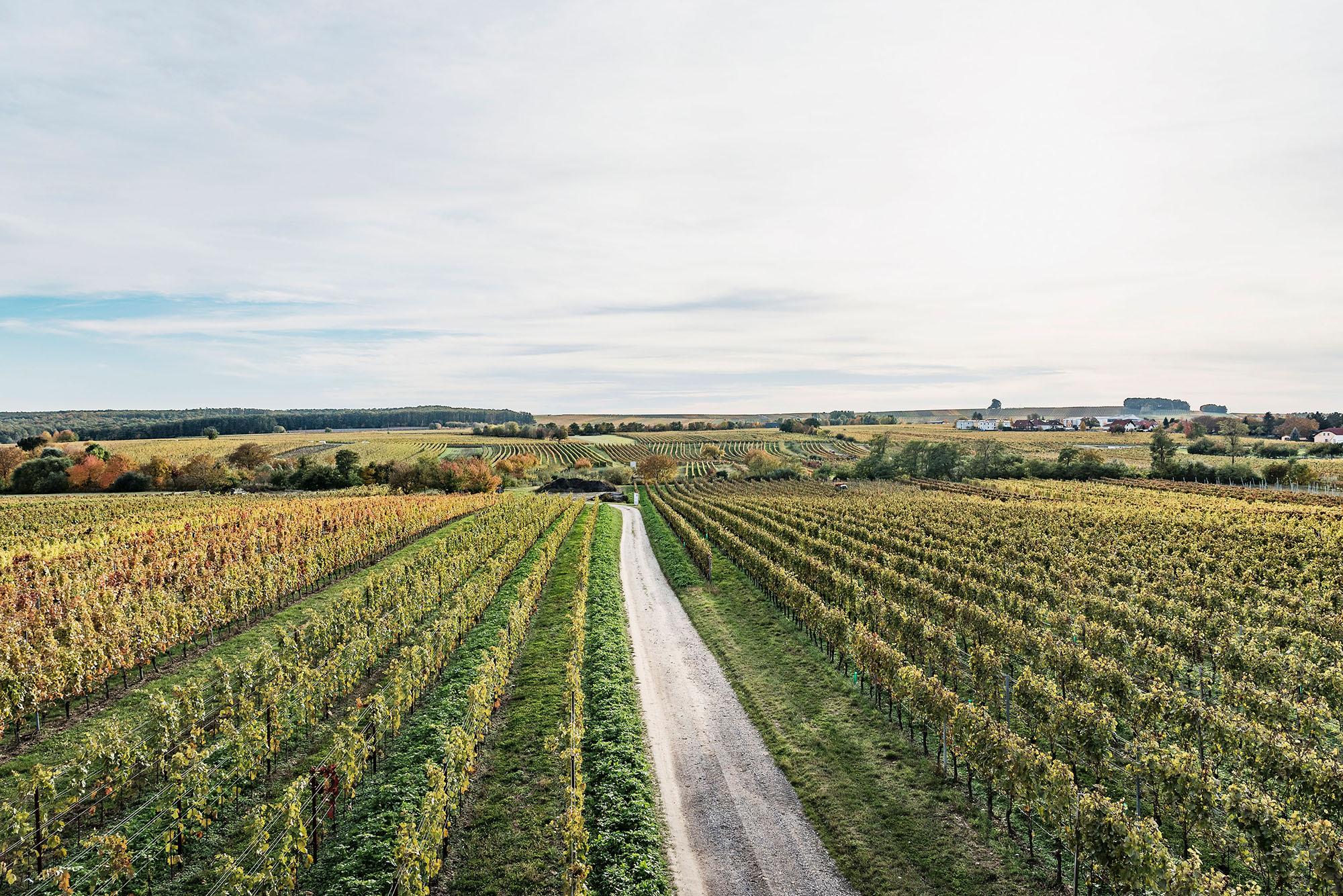 Herzstück Weingarten
